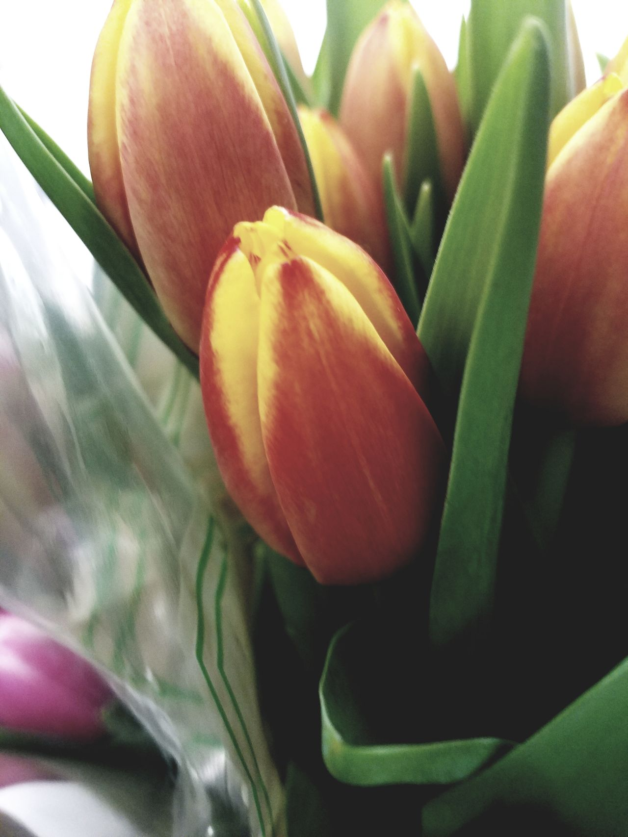 Flower Freshness Nature Fragility Beauty In Nature Close-up Growth Tulip Plant No People Day Blooming Flower Head Backgrounds Outdoors Indoors  EyeEmNewHere The Week Of Eyeem Background Pattern Arrangement Flowers Bouquet Freshness Nature
