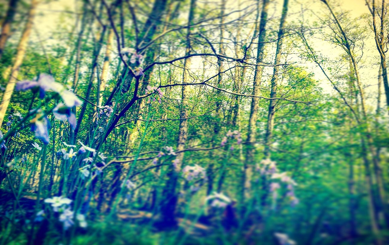 The nature of the forest Picoftheday Followme Takenbyme Forest Flowers FollowMeOnInstagram Likemypics Photography Sun ☀ Nature Photography