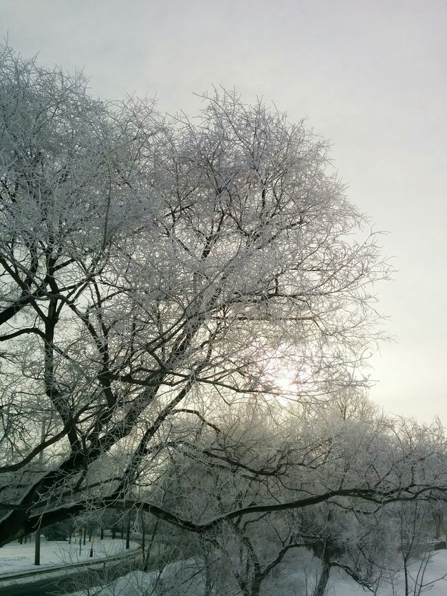 Trees Frosted Trees Amazing View Eye4photography  Winter Nature Snow Getting Inspired Lakeshore Elegance Everywhere
