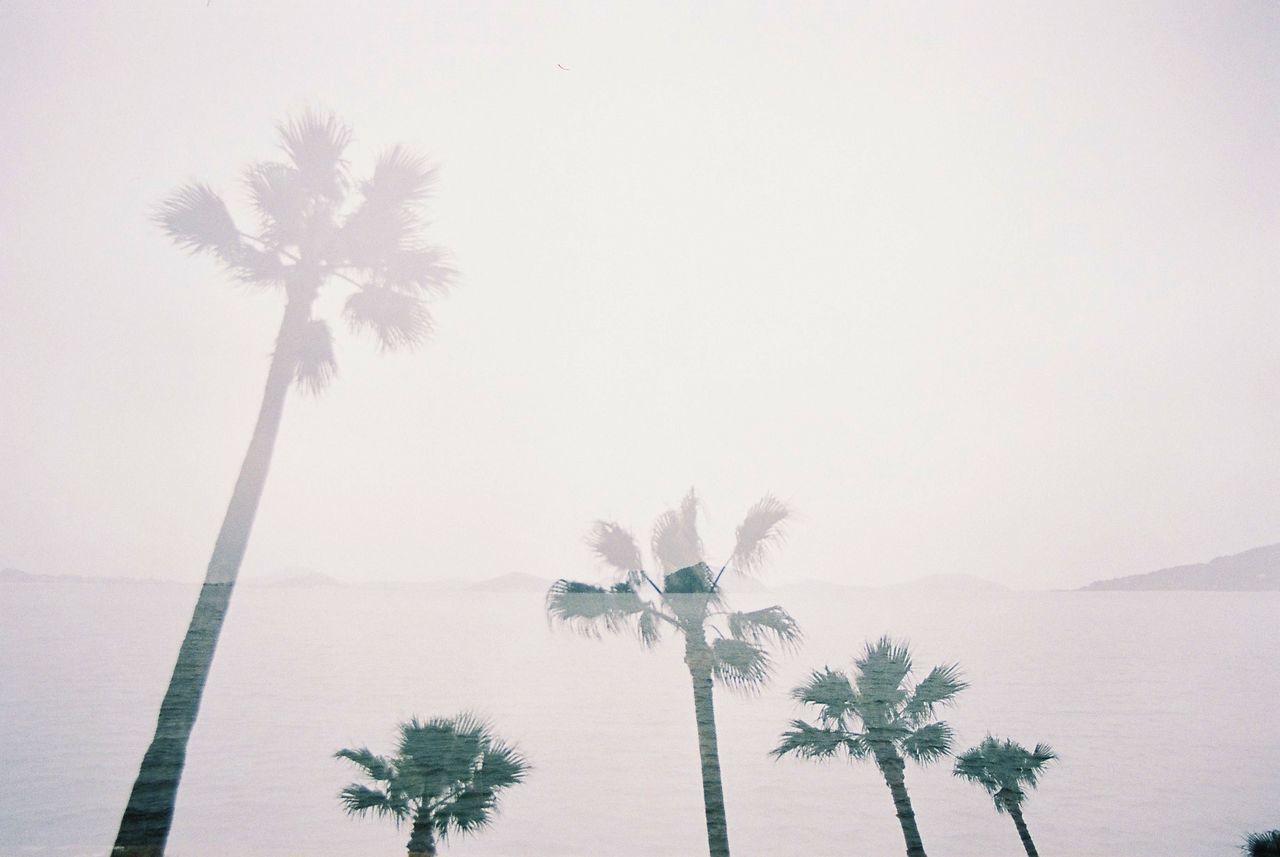 Multiple Layers Multiple Exposures palm trees Trees seaside sea clouds EyeEm Best Edits EyeEm Best Shots The Traveler - 2015 EyeEm Awards