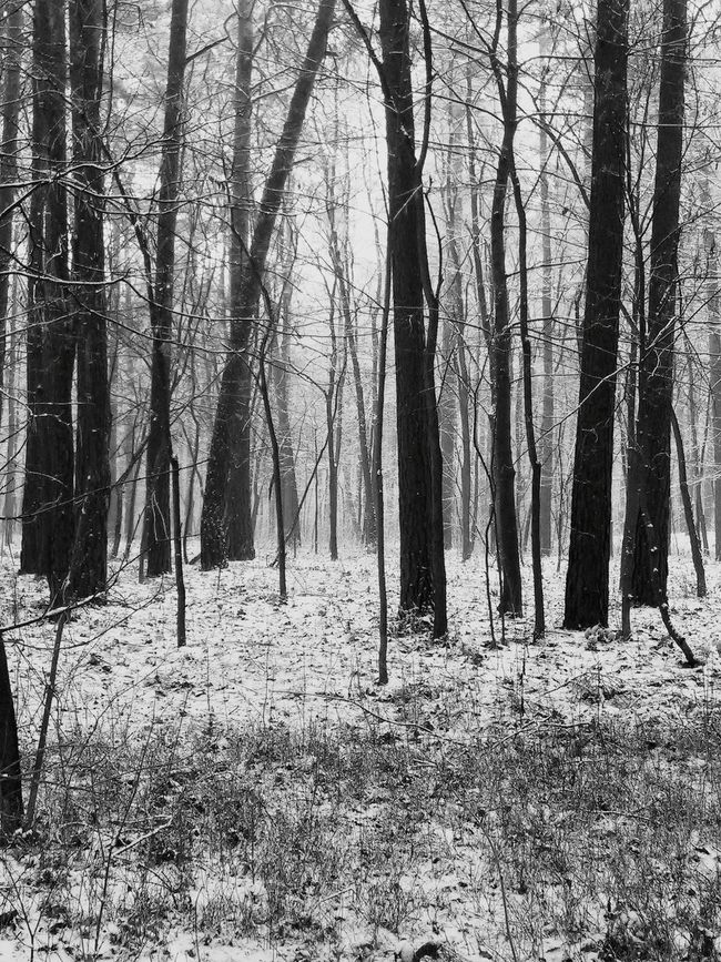 Snow Trees Forest Walking Alone... First Eyeem Photo