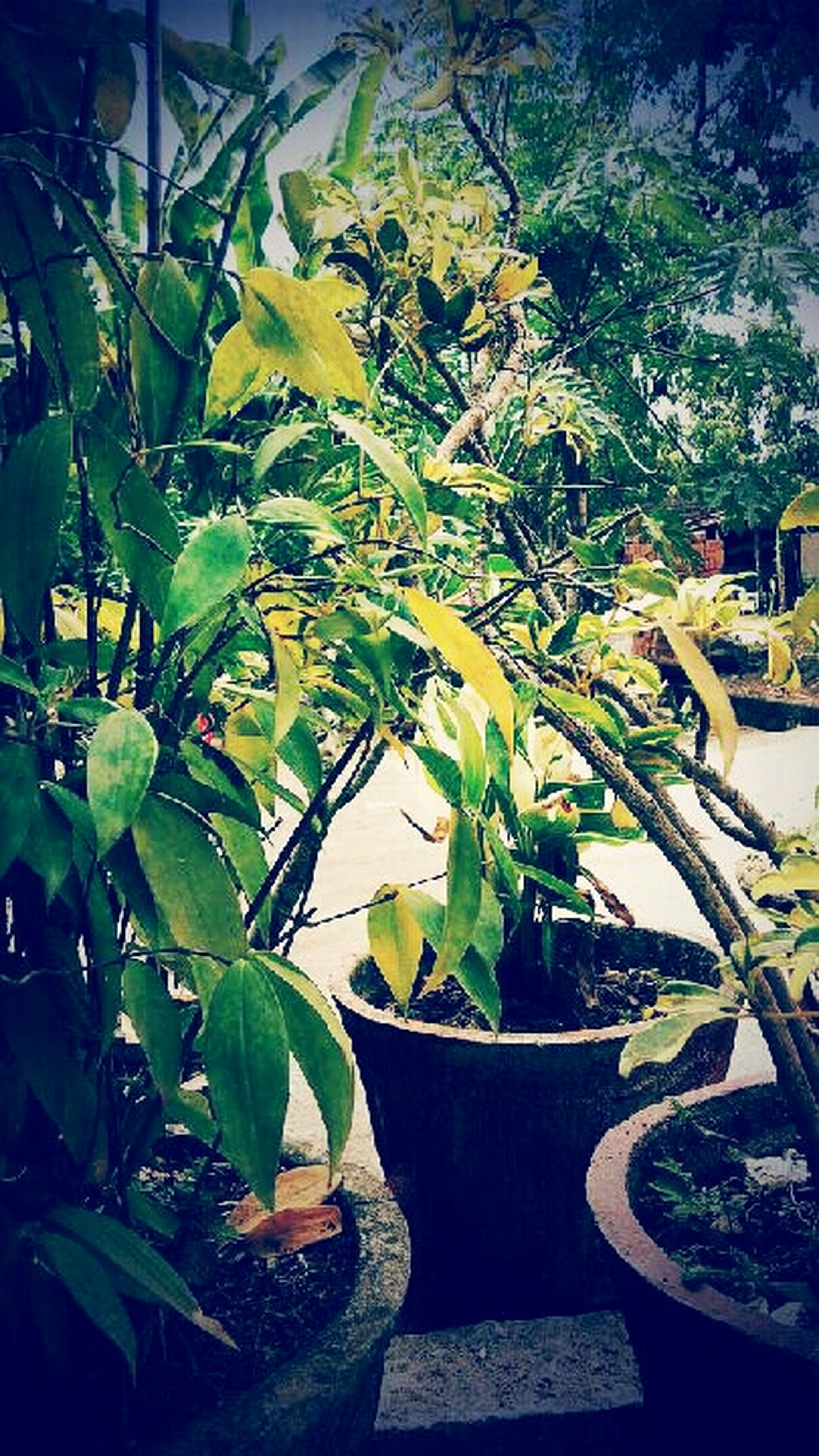 leaf, growth, potted plant, plant, green color, nature, tree, table, front or back yard, freshness, sunlight, day, chair, close-up, no people, beauty in nature, outdoors, growing, focus on foreground, green