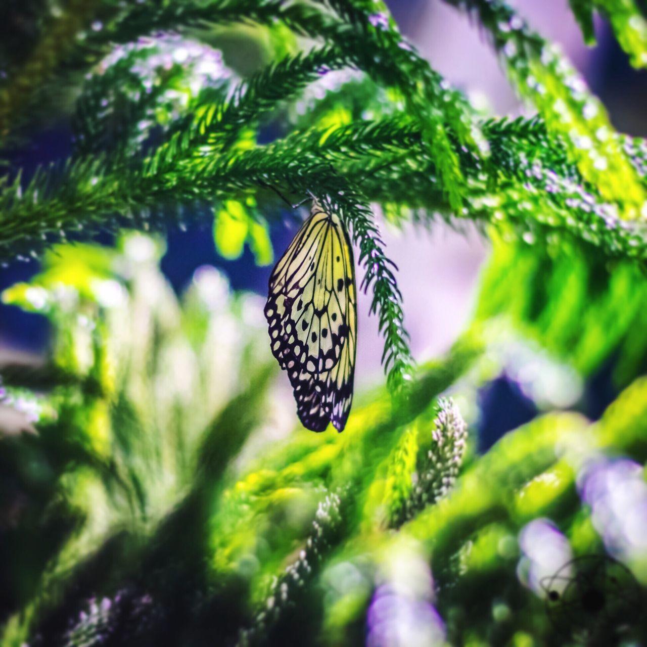 Butterfly Butterflies Observatory