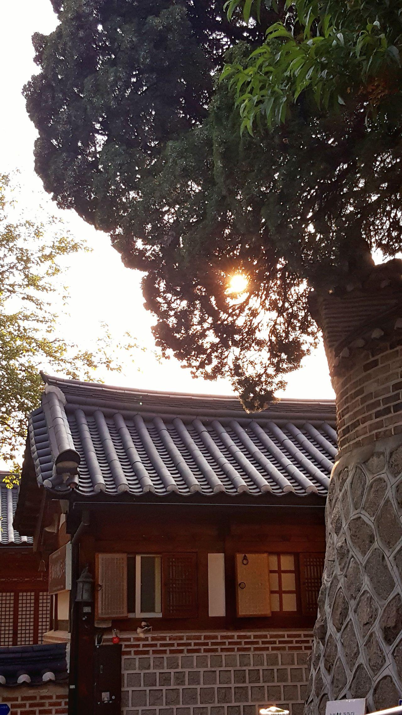 가회동의 발견. Sunset Traditional Architecture Rooftop Tree Beautiful Place Korea Oldwall