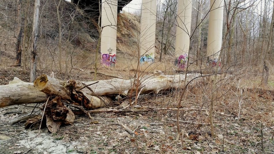 No People Close-up Interstate 90 Up Above Outdoors Water A River Runs Through It Graffiti Photography Bare Trees Man Made Structure Largerthanlife Nature