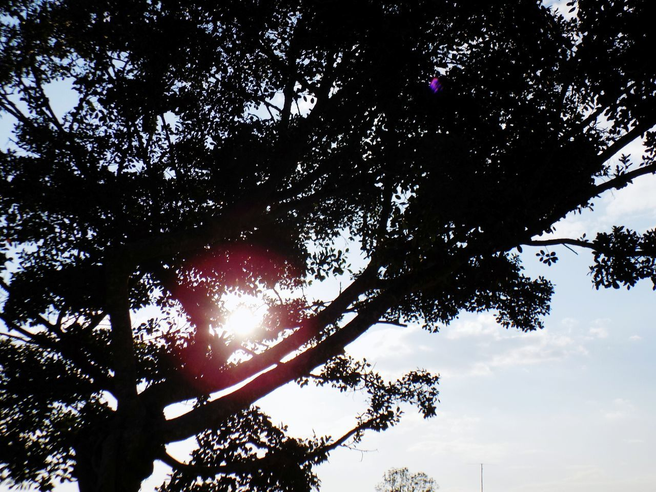 tree, low angle view, nature, tranquility, sky, beauty in nature, outdoors, sun, branch, day, scenics, tranquil scene, sunlight, growth, no people, astronomy