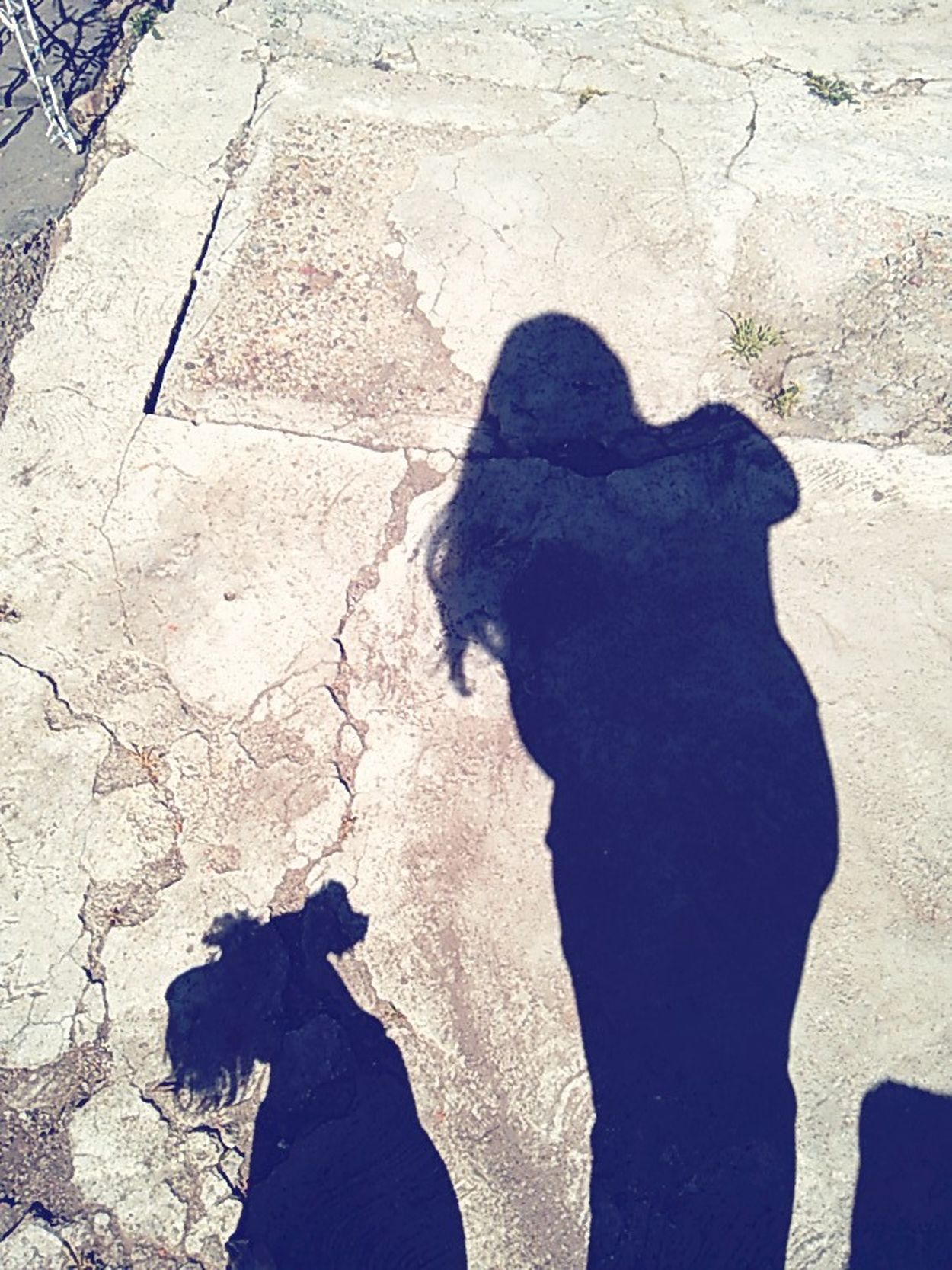 Shadow Focus On Shadow One Person Sunlight Real People Outdoors Day Women Human Body Part Low Section Siluet Sombras Sombra Dog Dogs Of EyeEm Dogs First Eyeem Photo Love Dogs Dogslife Dosg Human Hand People Adults Only Adult