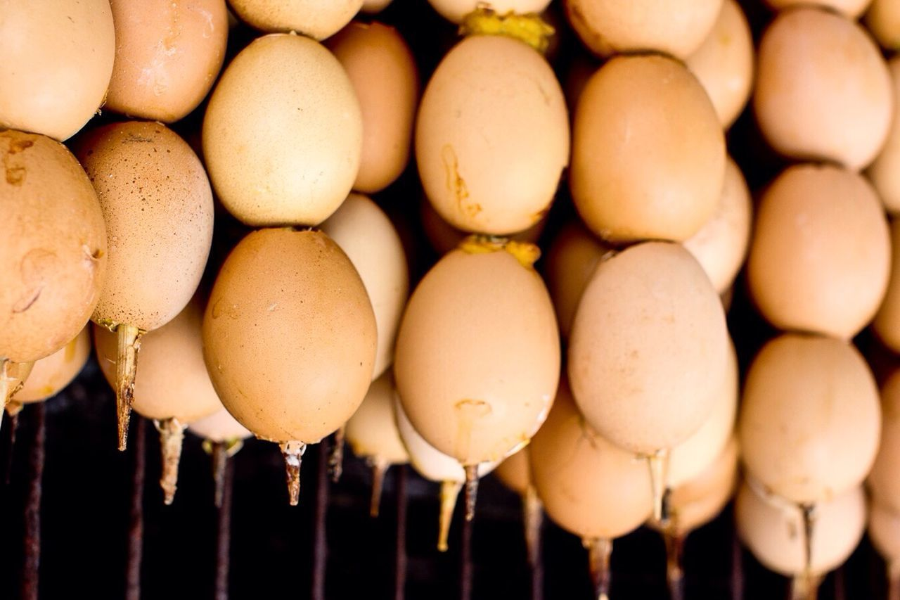 Beautiful stock photos of egg, Close-Up, Cultures, Egg, Focus On Foreground
