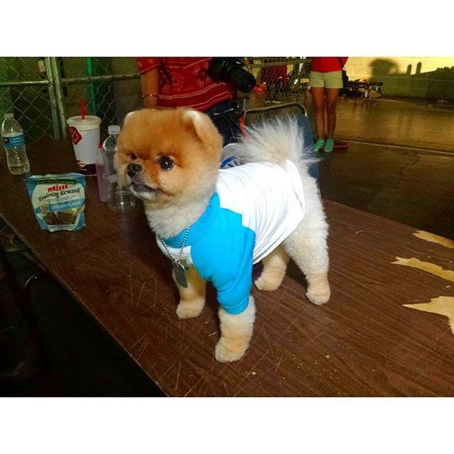 This is Jiffpom . He is a Dog . And he has 1.5 million followers. That's more people than the individual populations of almost a quarter of the UN member states... Setlife WODLA15 WorldofDance dogsofinstagram laliving californiadreaming