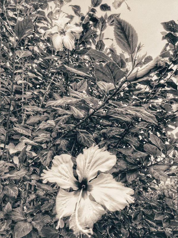 Eye4photography  EyeEm Best Shots EyeEm Nature Lover EyeEm Best Edits EyeEmBestPics Blackandwhite Nature Flowers Taking Photos Oman LoveNature Beautiful Wannabeaphotographer:) Check This Out 🌸🌿