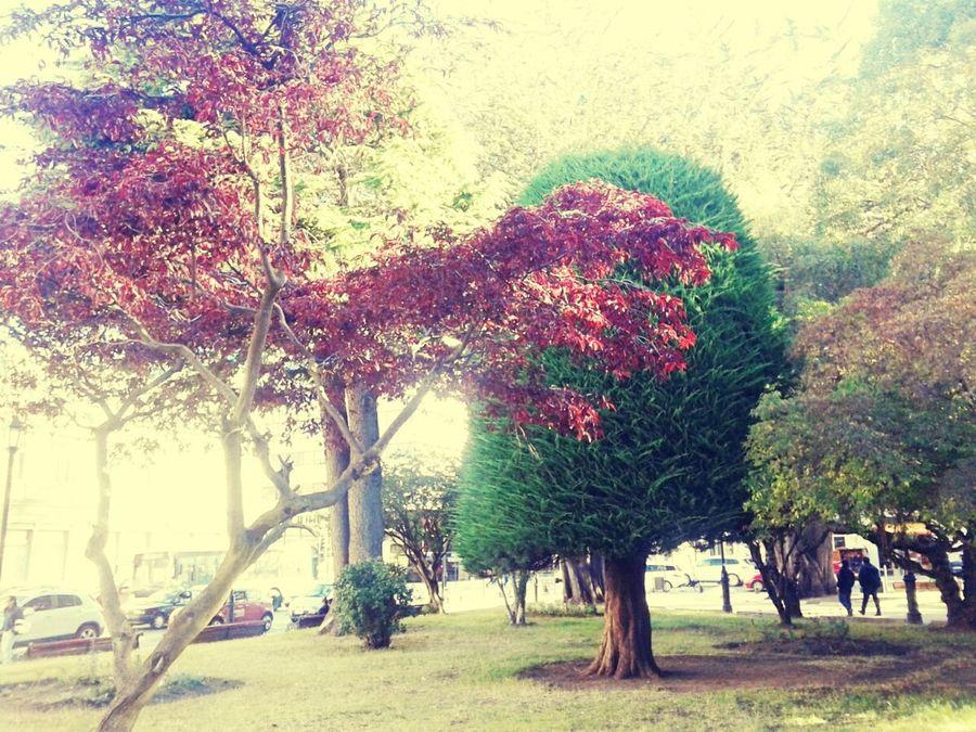 Naturebeauty Arboles Naturaleza