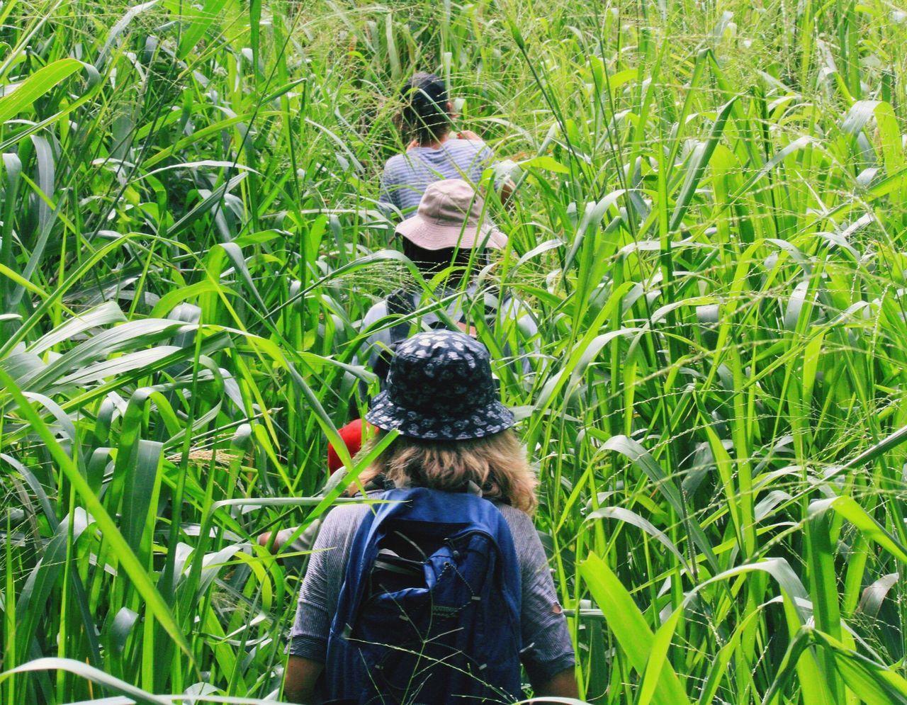 Stranglingvines Sri Lanka Lankalyf Hiking Travel The Journey Is The Destination