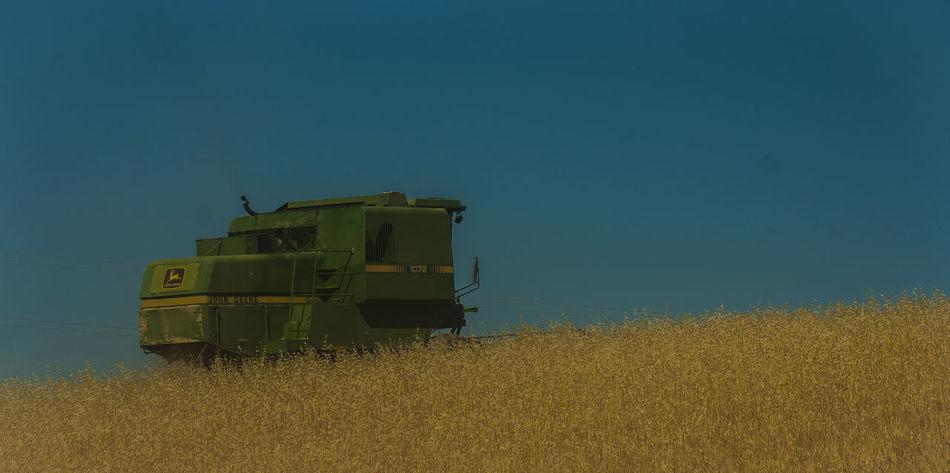 Campina Cereal Cereals Jaen Province Linares Trigo Wheatfield Wheatfields