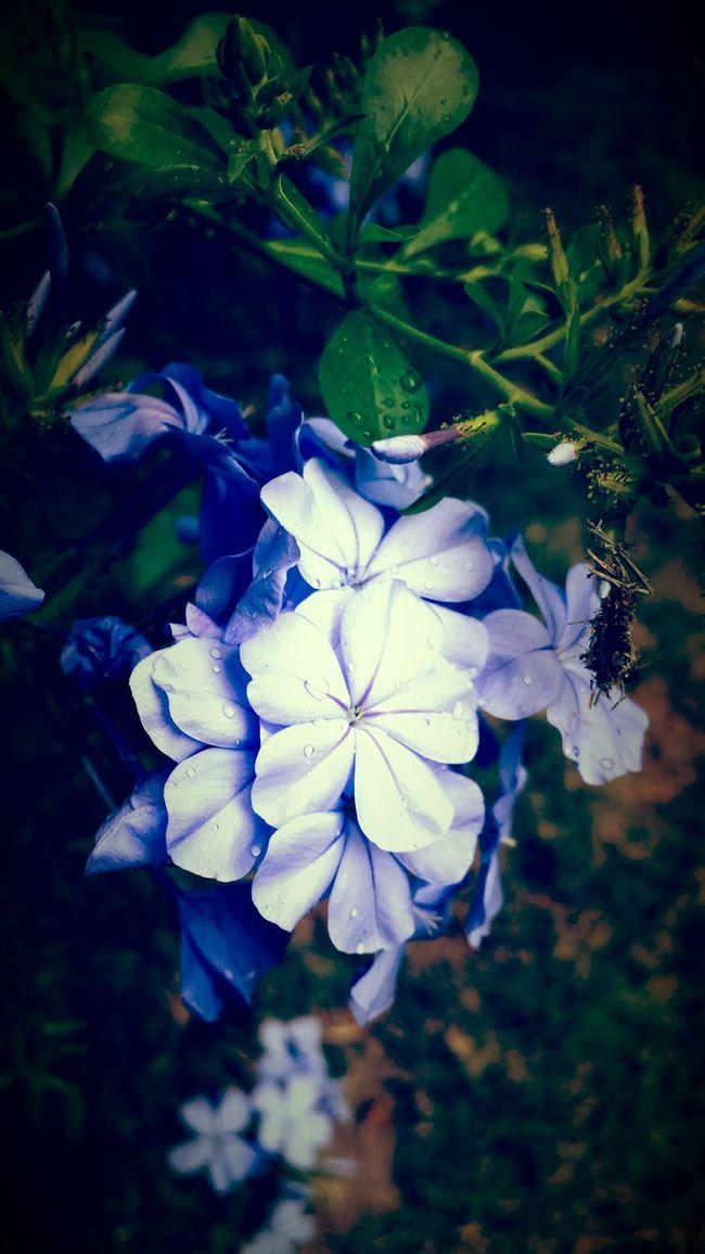 Closeup No Effects Eyem Best Shots Nature_collection Flowers After Rain... Nature_collection Nature Is Art Florals Taking Photos Macro Beauty Enjoying Nature Eyem Nature In My Garden