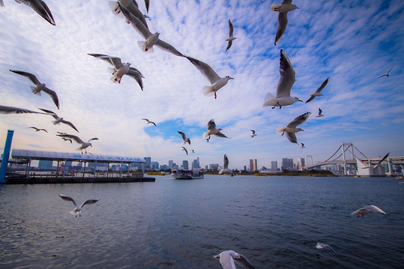 Birds Bird Photography EyeEm Birds Seagulls Flying Sky Tokyo Bay EyeEm Gallery Landscape Showcase: November