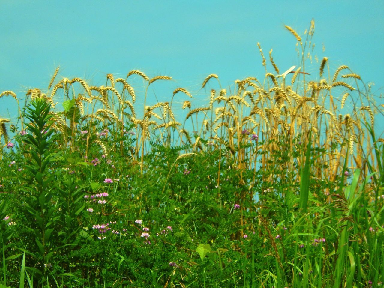 Low Angle View Of Plants Growing On Field