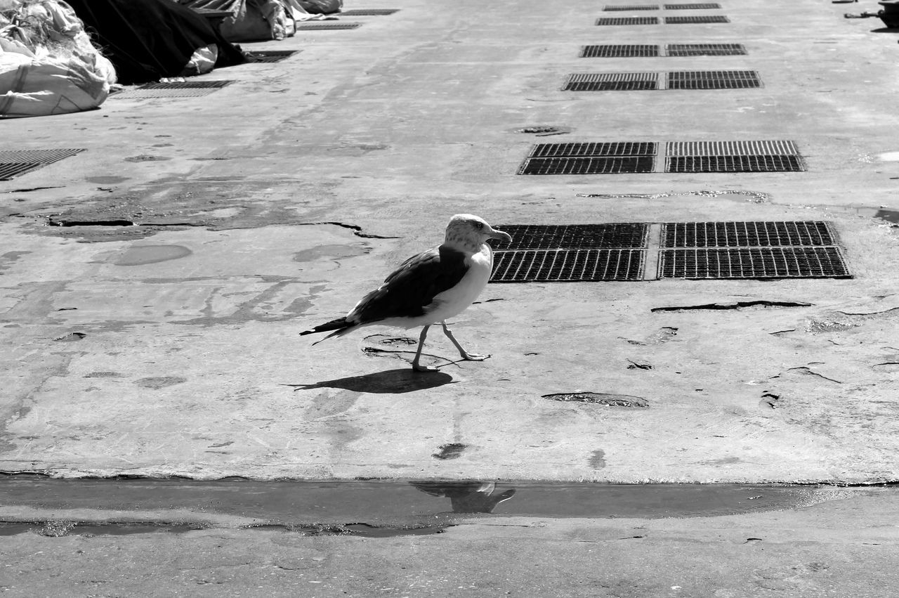 Seagull Reflection Blackandwhite Dock Dockside Bird Photography Birds_collection Enjoying The View Eye4photography  EyeEm Best Shots Black & White EyeEm Minimalism EyeEm Nature Lover Taking Photos Eyeemphotography EyeEmBestPics Black And White Eye4black&white  Baia De Cascais Portugal Learn & Shoot: Simplicity My Best Photo 2015