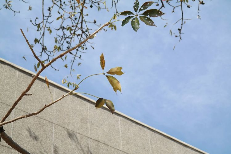 Patterns in nature No People Built Structure Outdoors Close-up Perching Architecture Nature Flying High Leaves Leaves_collection Leaves🌿 Pattern Pieces Patterns In Nature