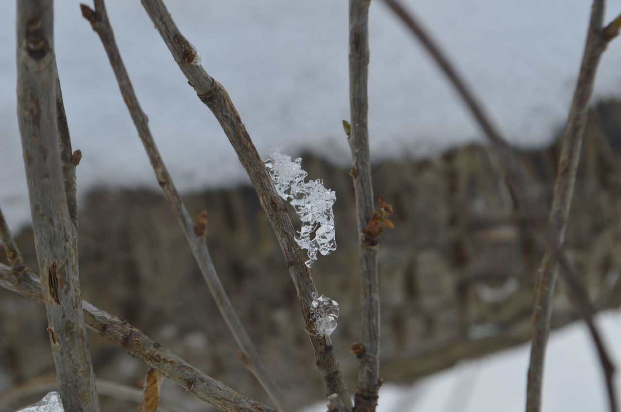 Climb Beauty In Nature Close-up Cold Temperature Day Dried Plant Focus On Foreground Frozen Nature No People Outdoors Plant Tranquility Twig Water
