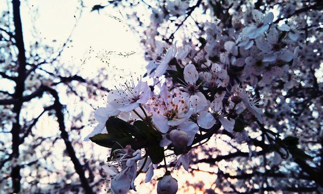 Hello World Flowers Hdr Edit