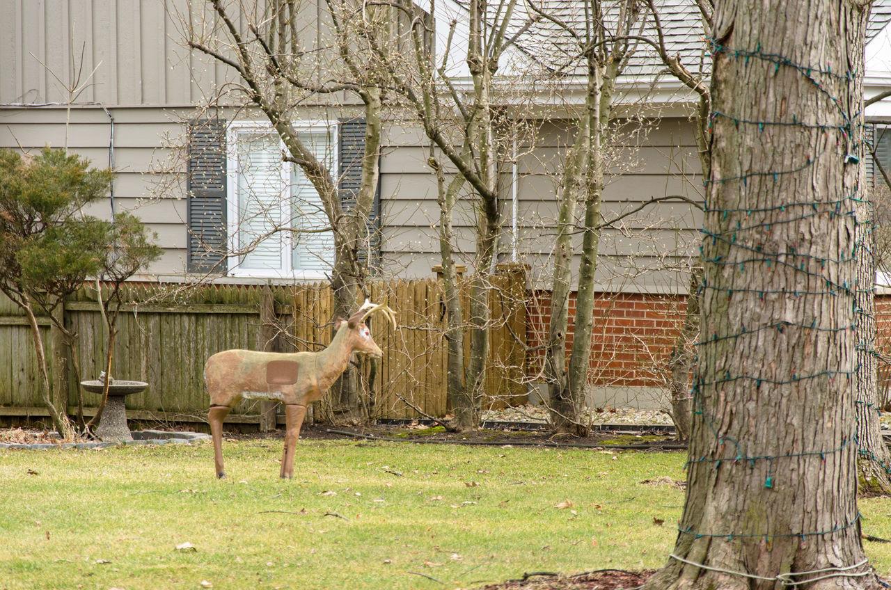 Animal Themes Antlers Building Exterior Deepfreeze Fake Deed Grass Livestock One Animal Wildlife