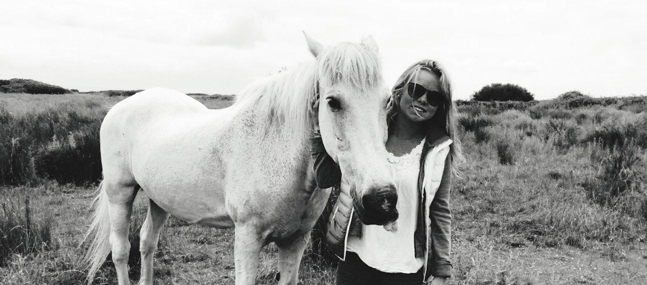 Hoedic Horse Summer ☀ Hollidays