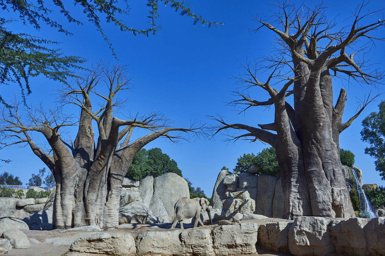 tree, statue, sculpture, day, bare tree, blue, low angle view, rock - object, nature, no people, outdoors, sunlight, branch, clear sky, growth, tree trunk, beauty in nature, scenics, sky