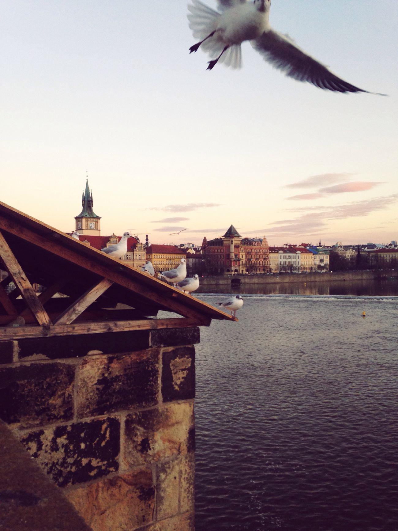 Karlův Most Praga♥ Evropa