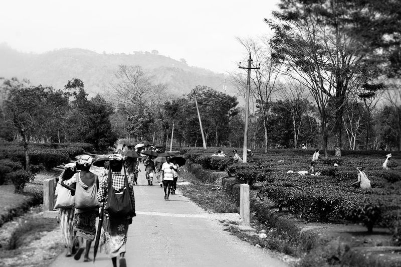Tree Road Street Outdoors People Adults Only Day Only Men Domestic Animals Adult Men Mammal Nature One Person One Man Only Sky City Nikon D3200 Nikonphotographer Workersworkes going back to home after plucking some tea leaves.. EyeEm Best Shots Streetphotography Indian Culture  Black And White Photography The Great Outdoors With Adobe