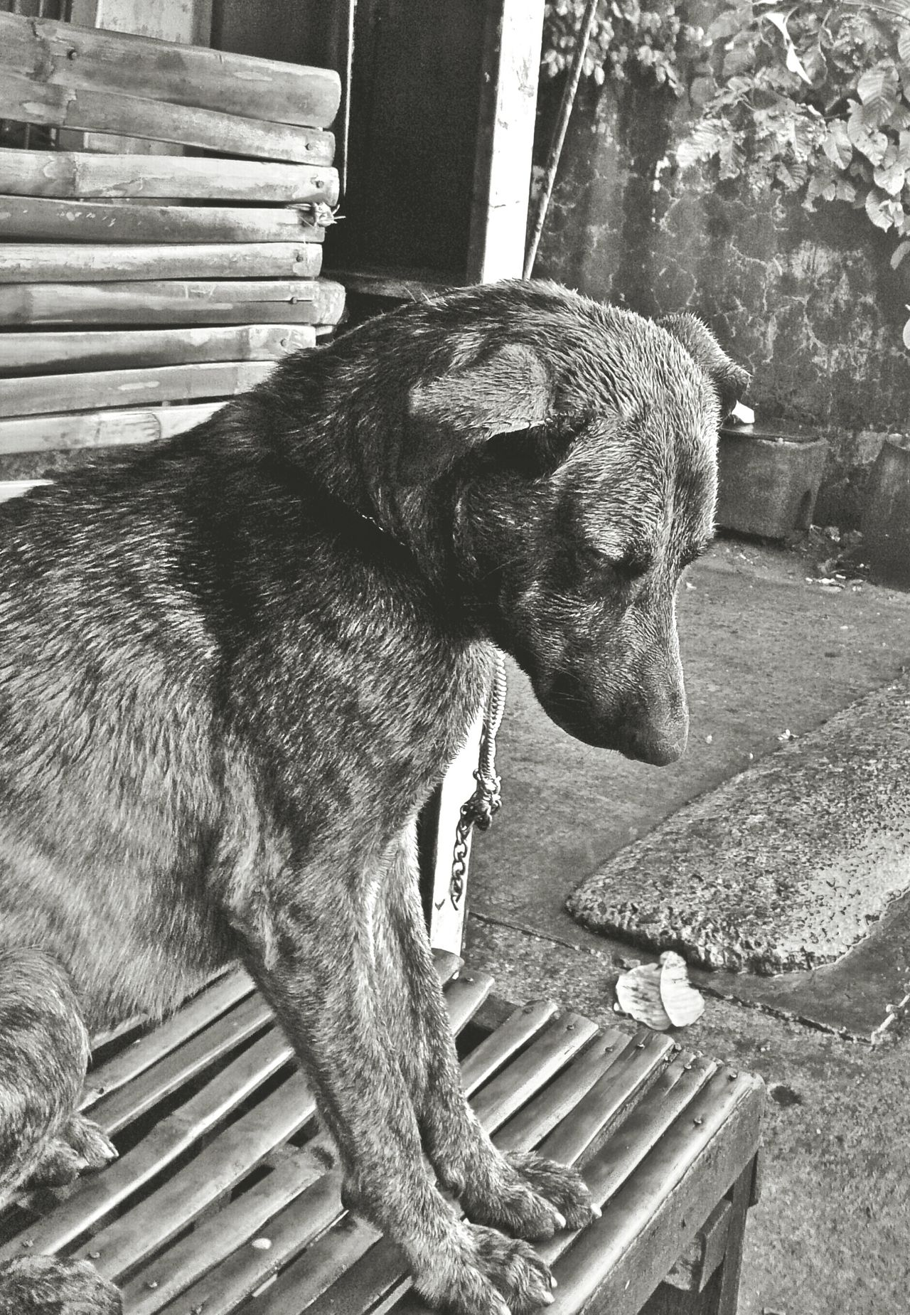 Blackandwhite Dogslife Alone Feeling Down Eyem Philippines