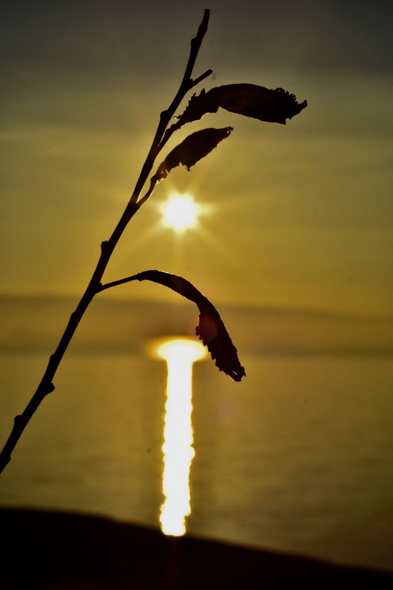 Nature Sunrise Nikon Beauty In Nature Plant No People Close-up Water Outdoors Sky Tranquility Fragility Day