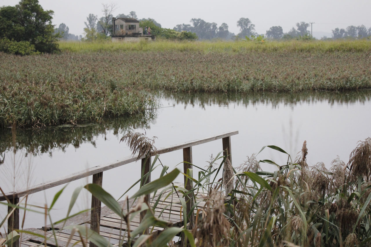 water, nature, growth, agriculture, plant, lake, outdoors, field, no people, green color, day, scenics, tranquility, reflection, tranquil scene, beauty in nature, grass, tree, rural scene, landscape, nautical vessel, rice paddy, sky