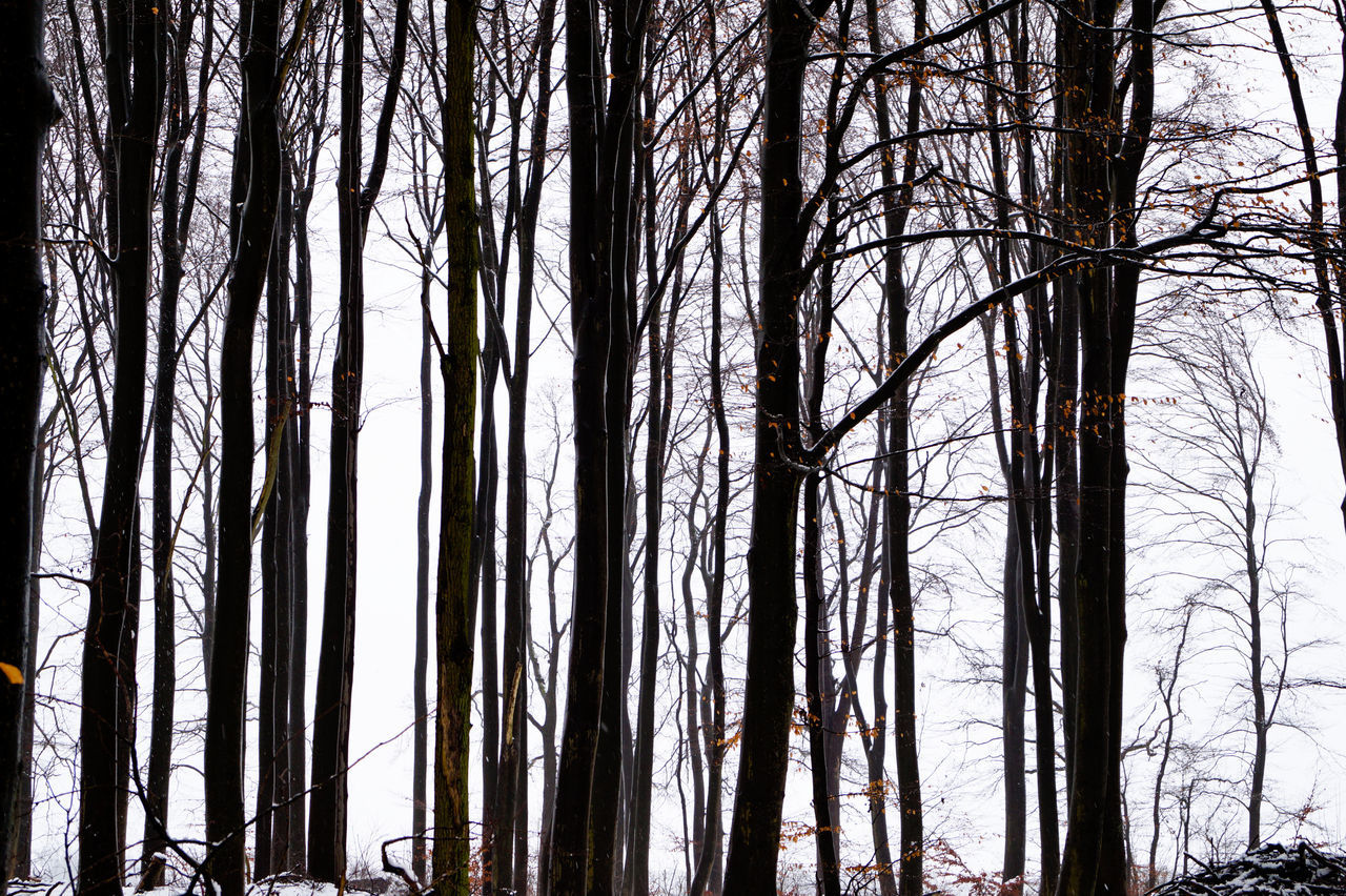tree, tree trunk, forest, nature, no people, environment, bare tree, tranquility, forest fire, outdoors, tranquil scene, beauty in nature, low angle view, day, scenics, branch, sky