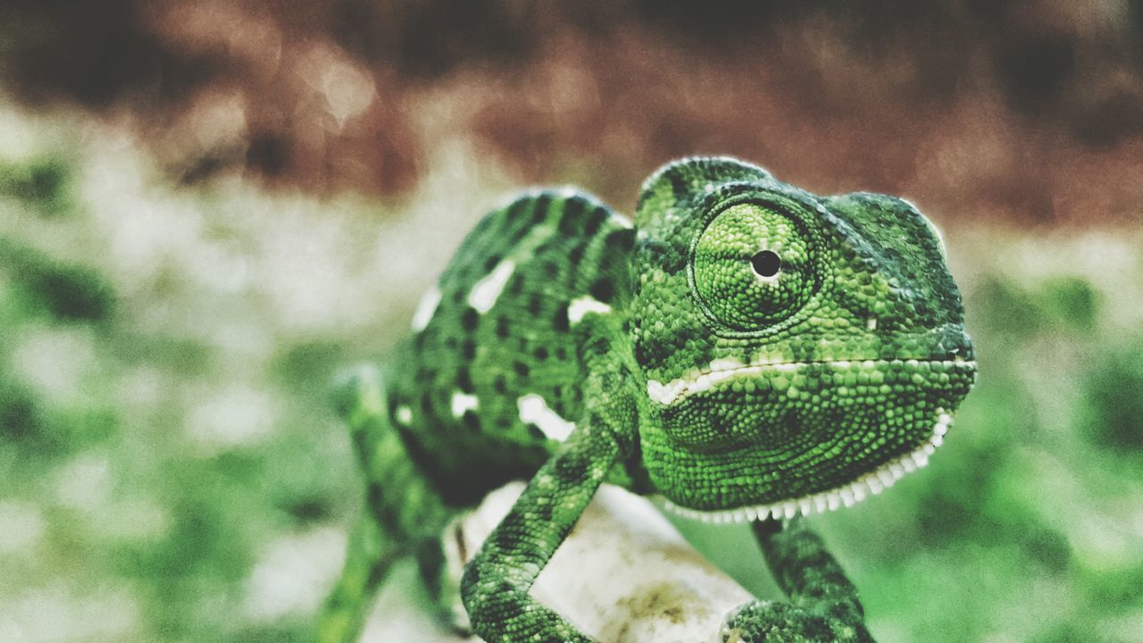 one animal, animals in the wild, animal themes, green color, animal wildlife, day, focus on foreground, outdoors, nature, close-up, no people, reptile