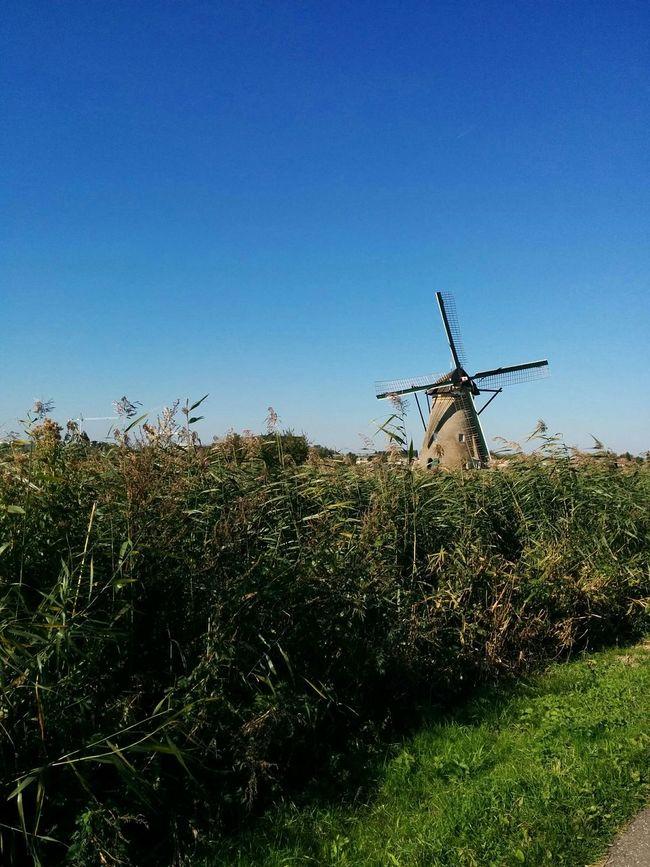 Kinderdijk Windmill Dutch Netherlands Relaxing Blue Sky Dyke  Irrigation Flood Control Water Management Wind Water Countryside