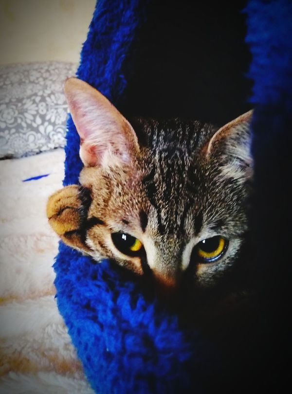 Cat Sleeping Gatto😸 Cuccia Big Eyes Cucciolo No People Looking At Camera Indoors  Animal Themes Mammal Domestic Cat Domestic Animals One Animal Pets Feline Portrait Close-up Home Interior Relaxation Day