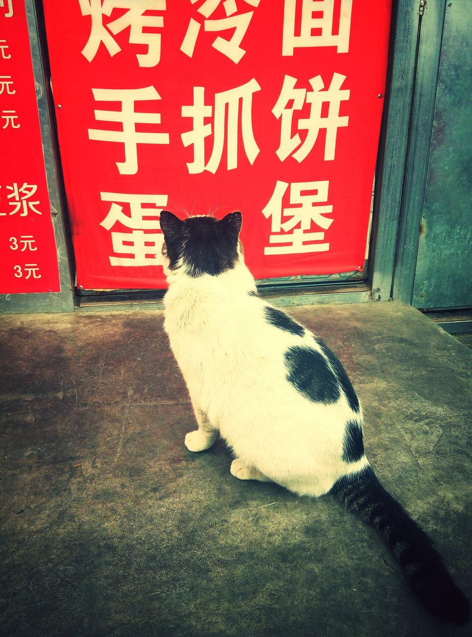 I want to eat!!!~ Outdoors Pets 🐱cat Lovely Winner ❤ Colour Of Life 可爱美丽的鼻涕虫 Animal Themes