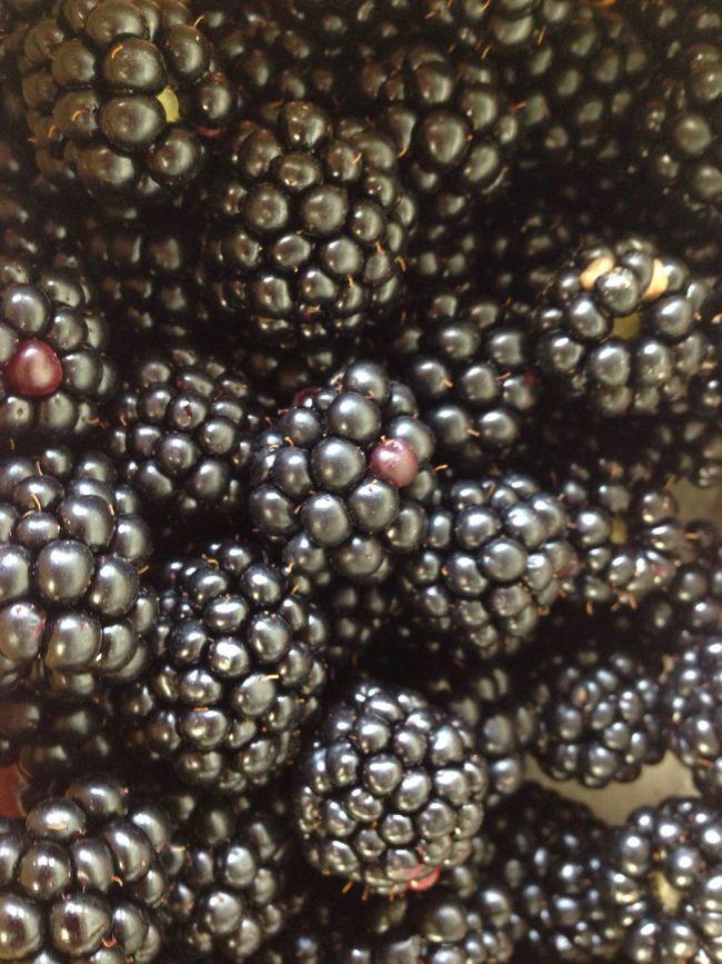 Brombeerstrauch Harvest Bio Fruit Self Cultivation Brombeeren Blackberry Garden Photography Garden