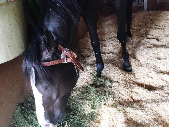 Horse I Love Horses 馬 Horse Life