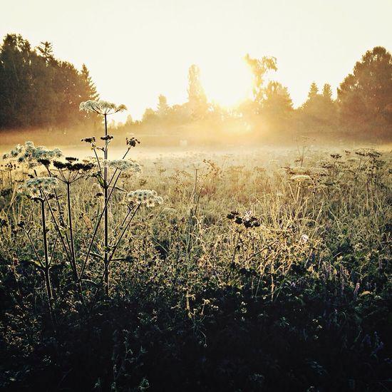 Morning-Run Running LOVE Running Sunrise Before Work .