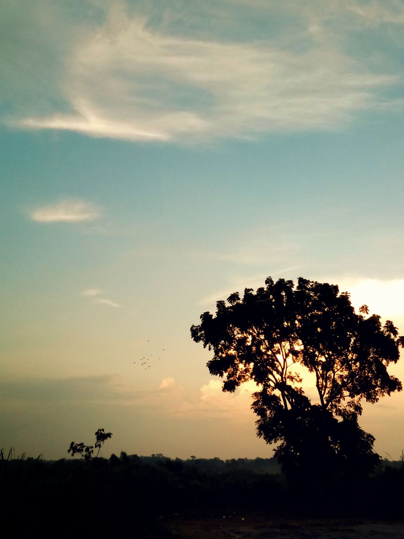 Sunset Tree Sky Nature Birds Birds🐦⛅ No People Outdoors Dusk Sky Bangladesh 🇧🇩 Beauty In Nature Shadow And Light Mobile Photography