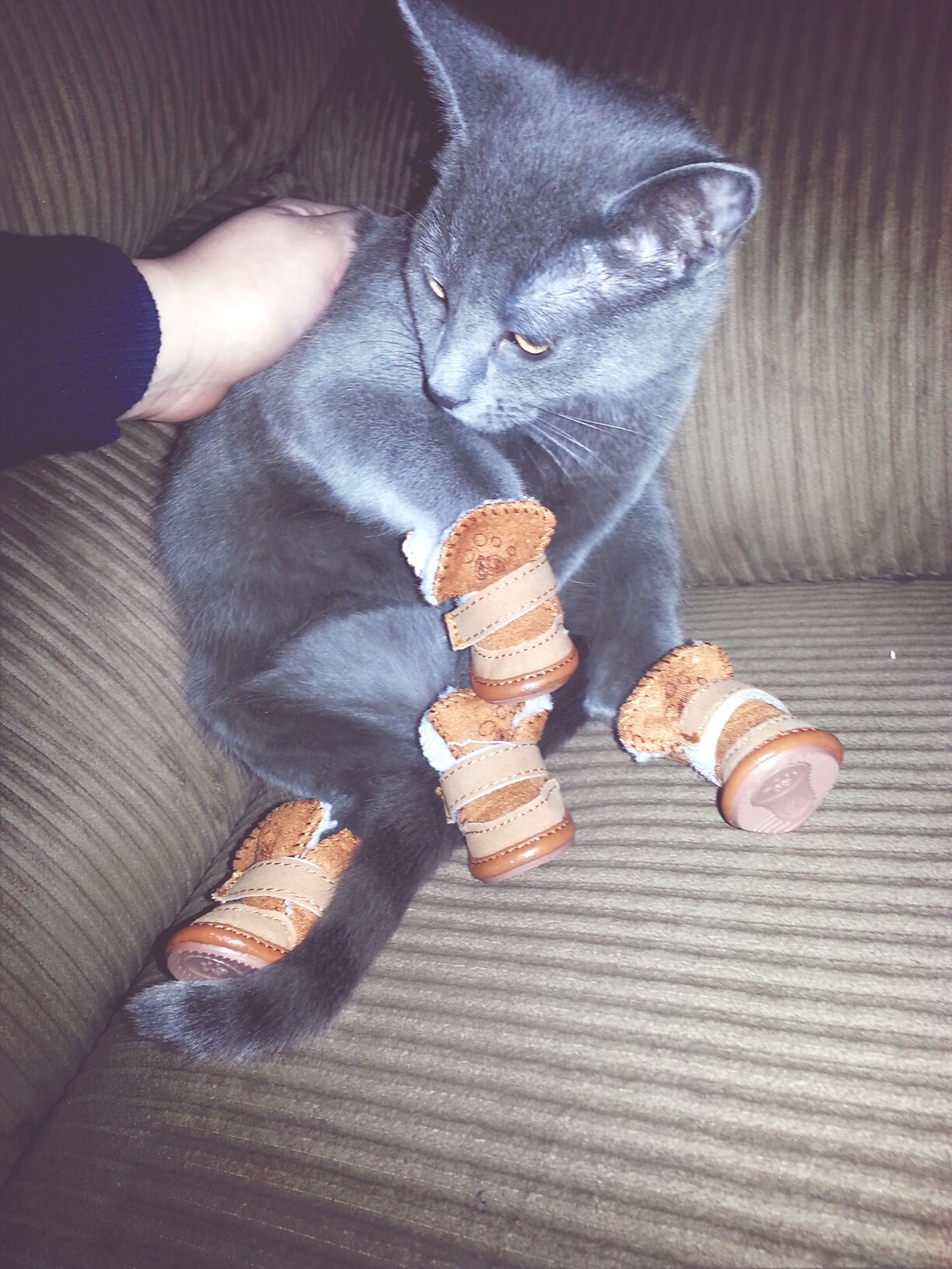 indoors, person, animal themes, one animal, food and drink, food, part of, holding, high angle view, wood - material, pets, unrecognizable person, human finger, close-up, domestic animals, cropped, table
