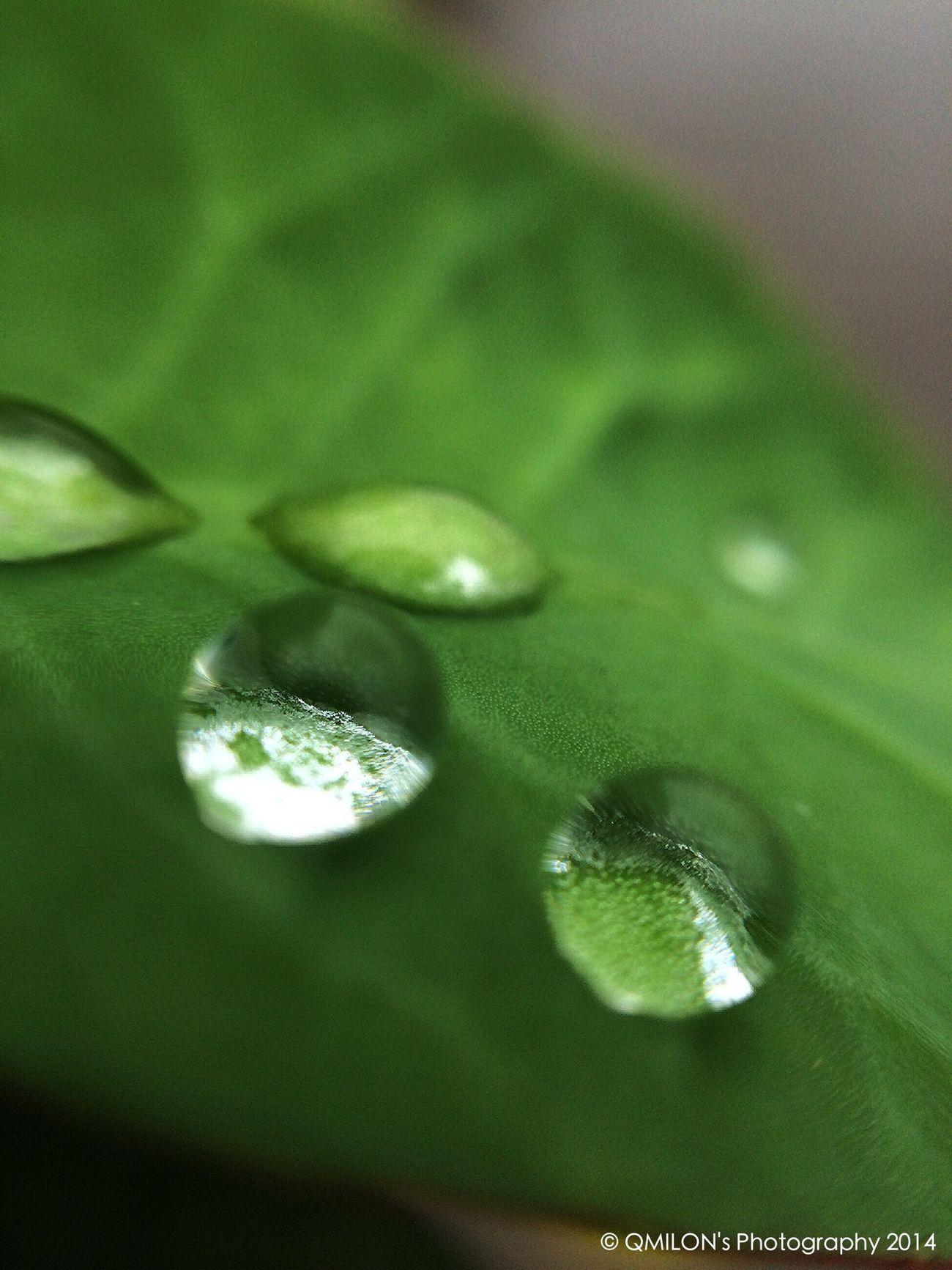 Droplets DropletsCreators Rain Drops Enjoying The Rain Drops