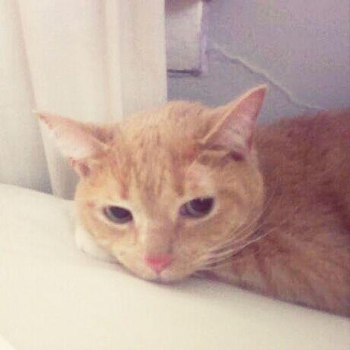 My Cat D'Angelo *