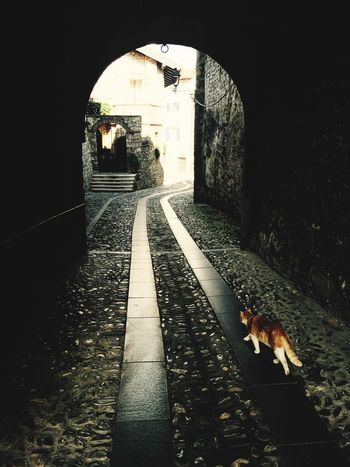 Cats Cityscapes Taking Photos