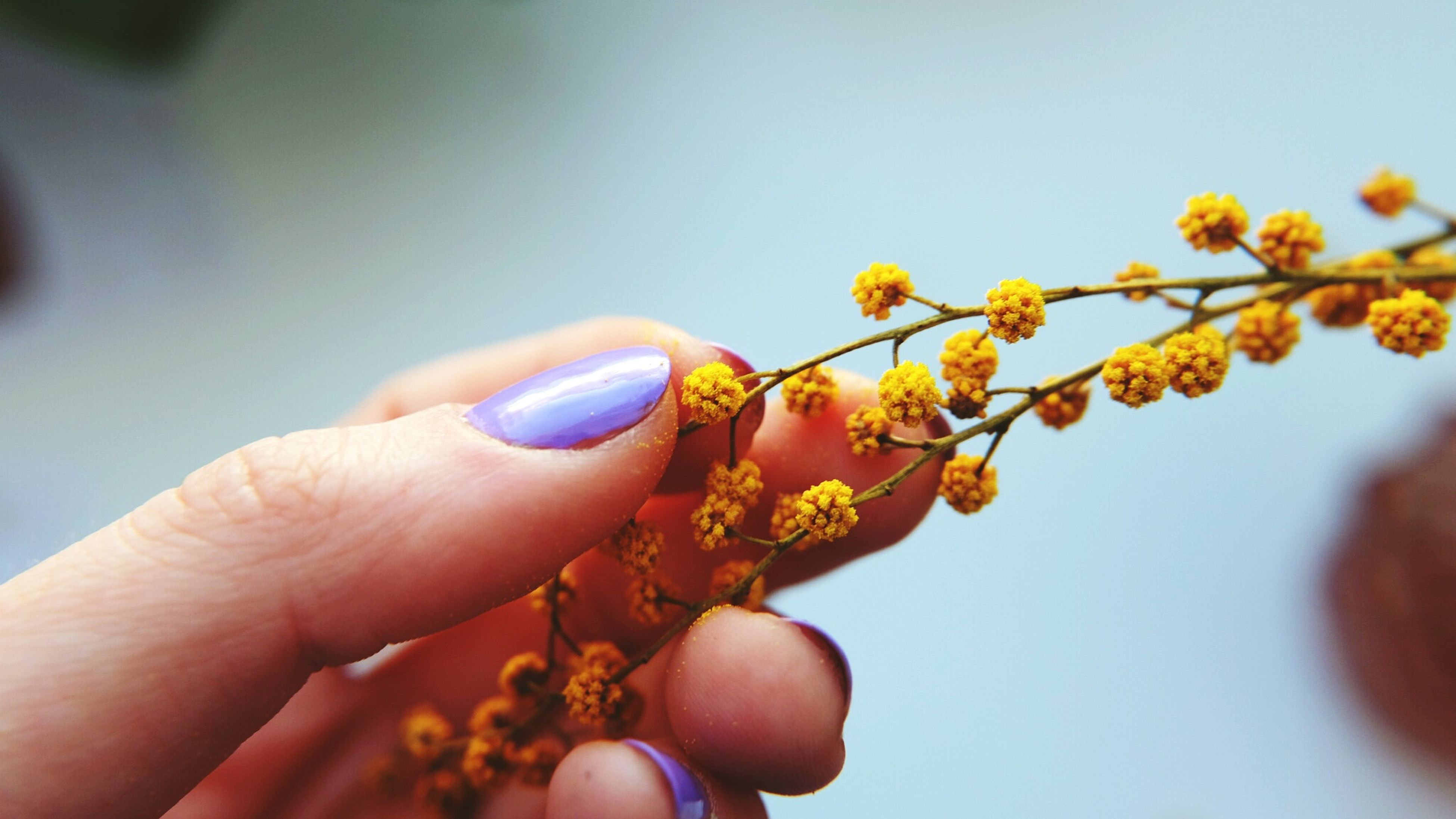 person, part of, holding, flower, cropped, human finger, personal perspective, freshness, close-up, unrecognizable person, yellow, focus on foreground, fragility, copy space, petal, beauty in nature, clear sky