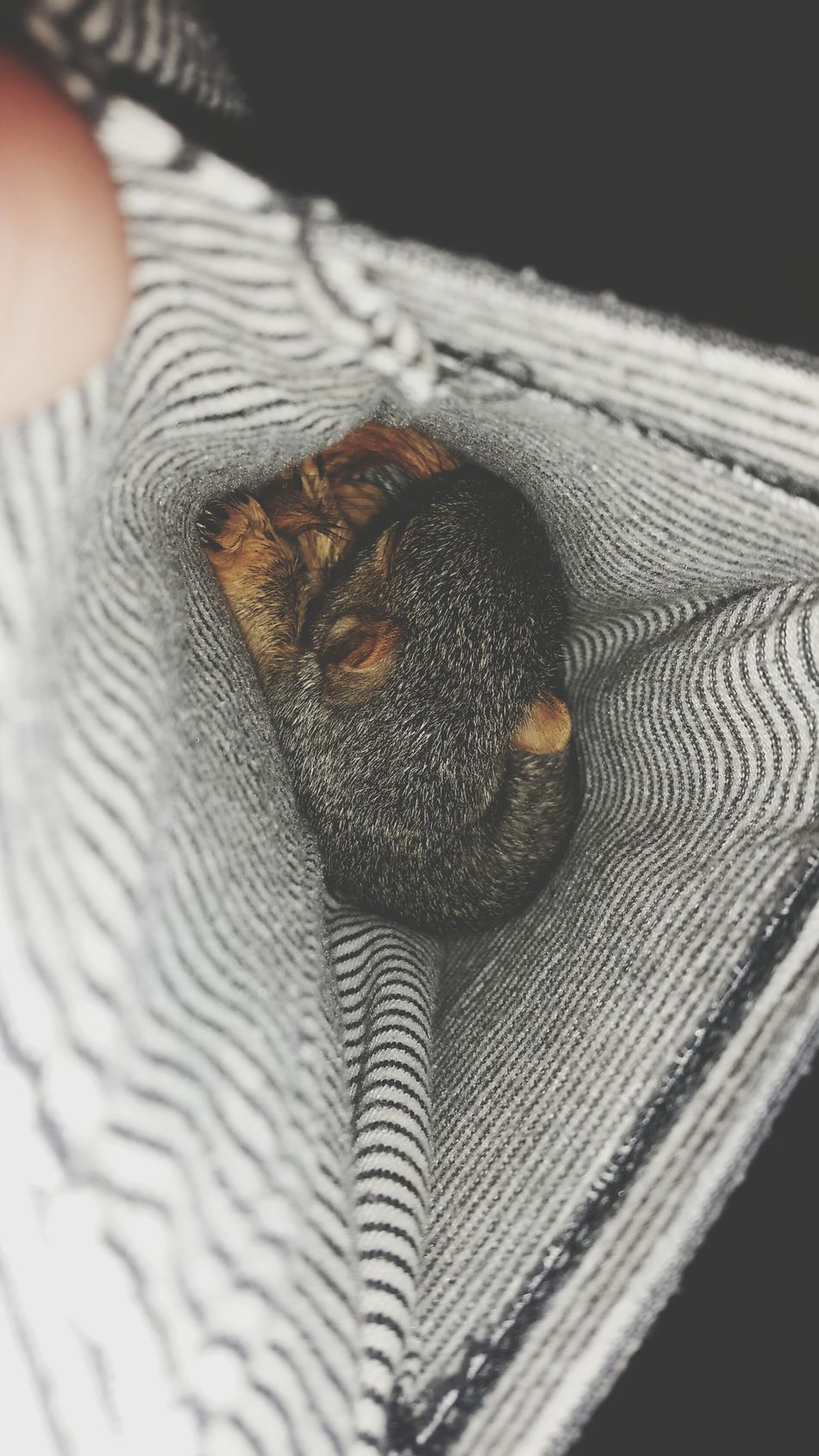 Love For Orphaned Animals Animal Love Baby Squirrel Orphaned Squirrel I Got A Pocket Full Of SunSHINE...