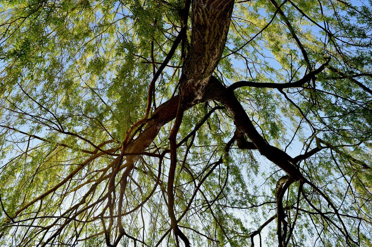 Beauty In Nature Day Hobbyphotography Low Angle View Nature Nikond5300 Nikonphotography No People Outdoors Sky Tree