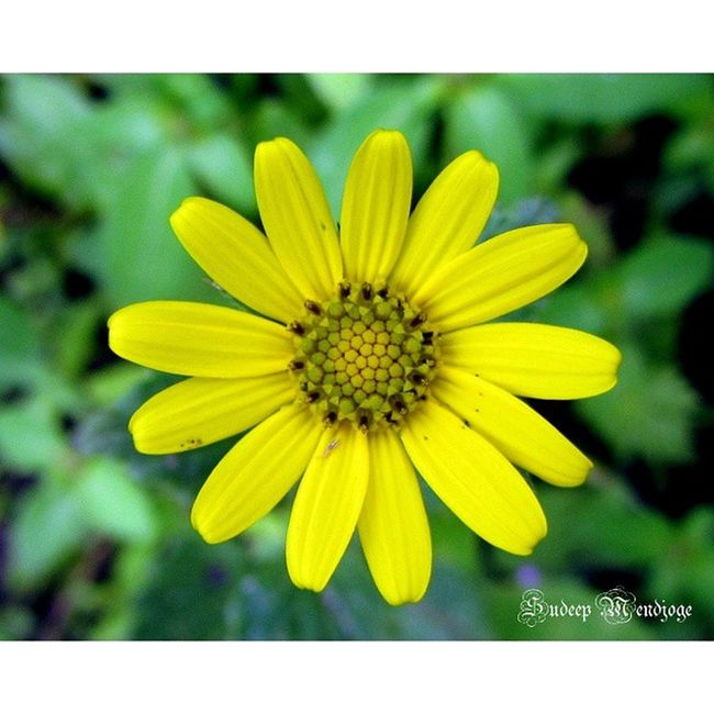 Rsa_flower Treasures_and_nature Tr_colors 123yellows ip_blossoms petal_perfection ptk_flower pixaffair phototag_macro ptk_macro picture_to_keep