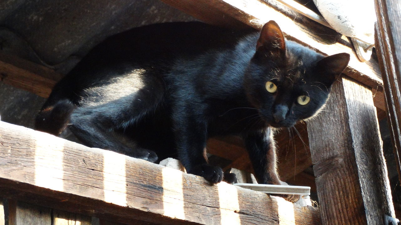 Tarzan, the cat. Animal Themes Black Cat Black Cat Photography Black Cats Are Beautiful Cat Day Domestic Animals No People One Animal Outdoors Pets